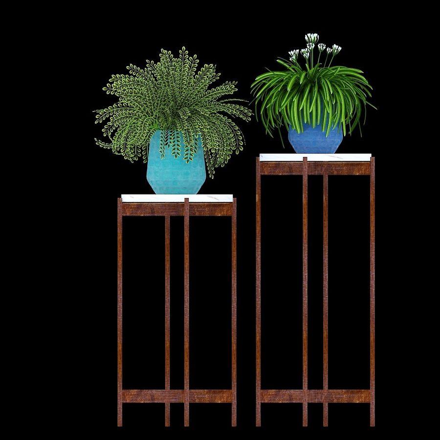 Potted Plant Set - Megathyrsus Maximus royalty-free 3d model - Preview no. 1