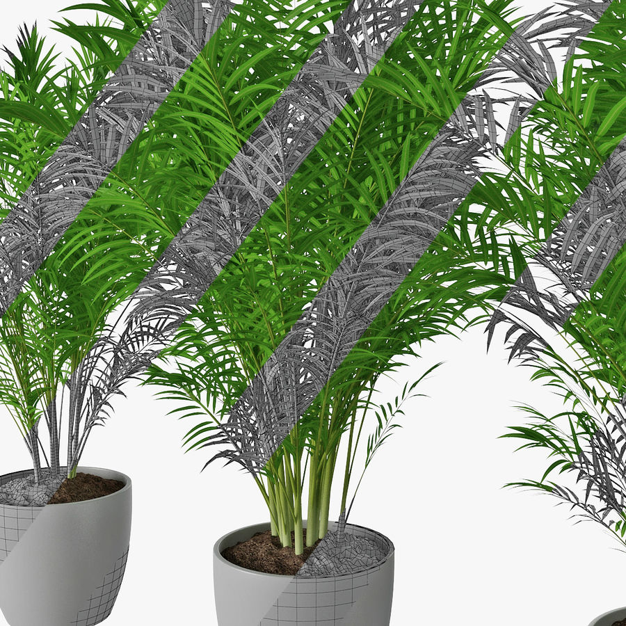 Palm 15 royalty-free 3d model - Preview no. 14