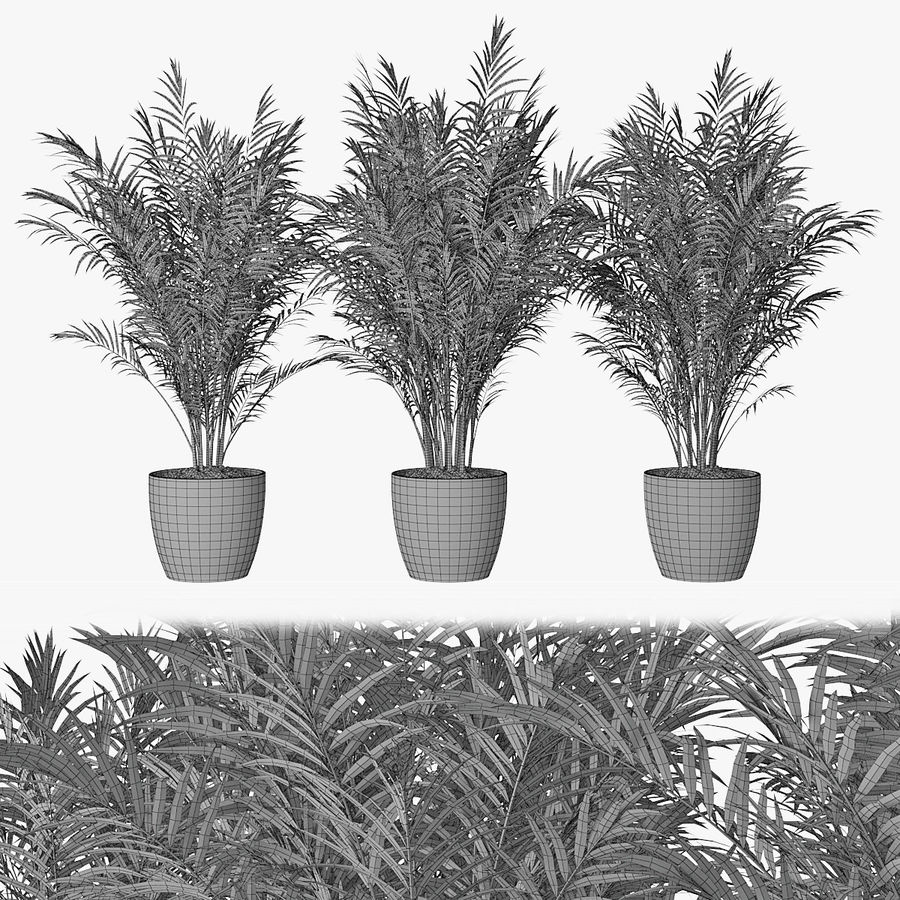 Palm 15 royalty-free 3d model - Preview no. 1