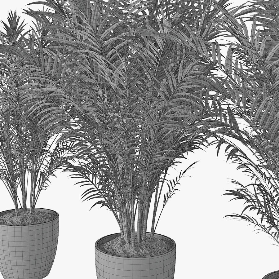 Palm 15 royalty-free 3d model - Preview no. 11
