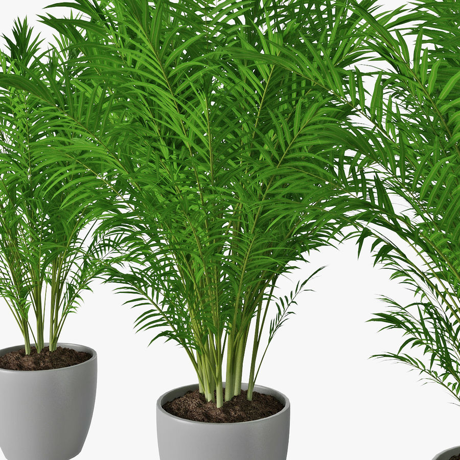 Palm 15 royalty-free 3d model - Preview no. 8