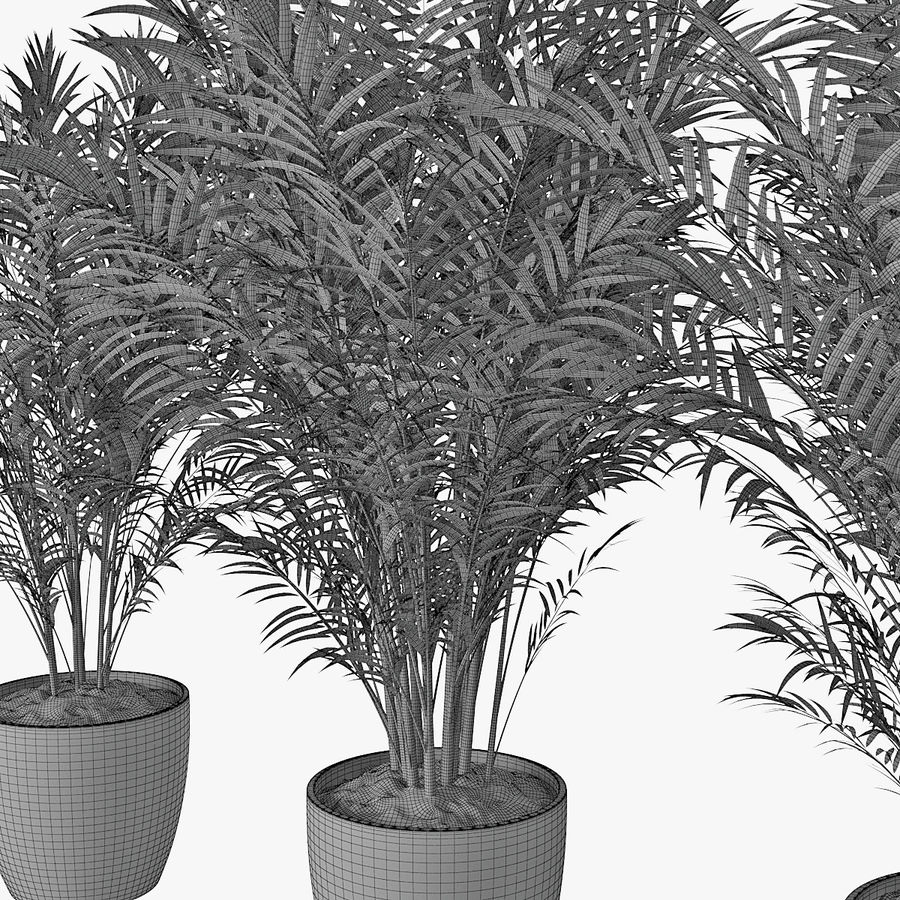 Palm 15 royalty-free 3d model - Preview no. 10