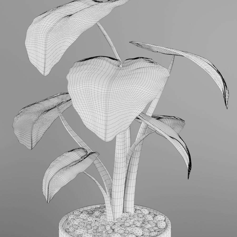 Alocasia home plant royalty-free 3d model - Preview no. 7