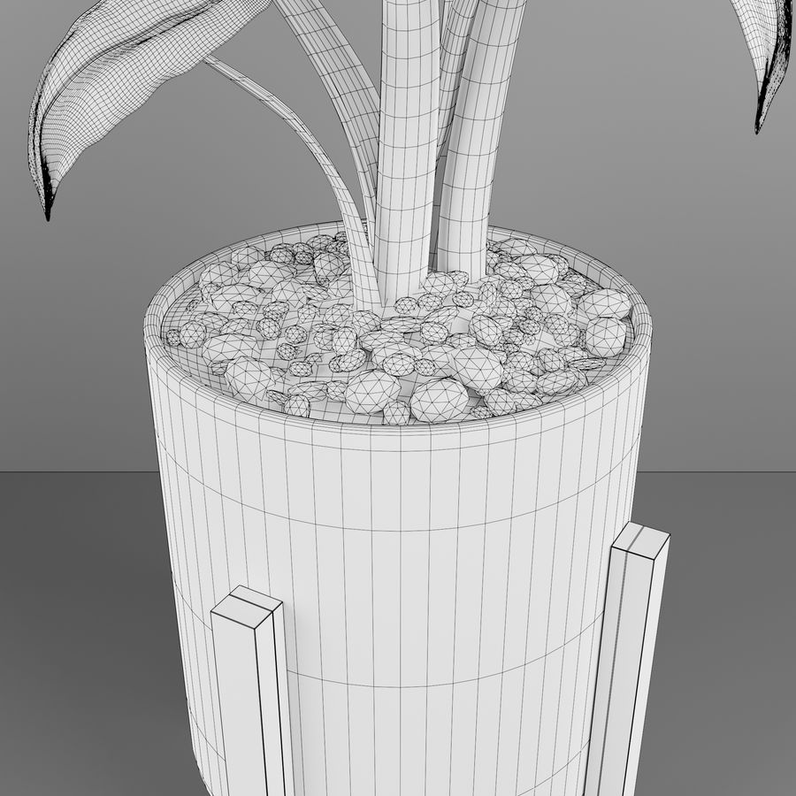 Alocasia home plant royalty-free 3d model - Preview no. 5