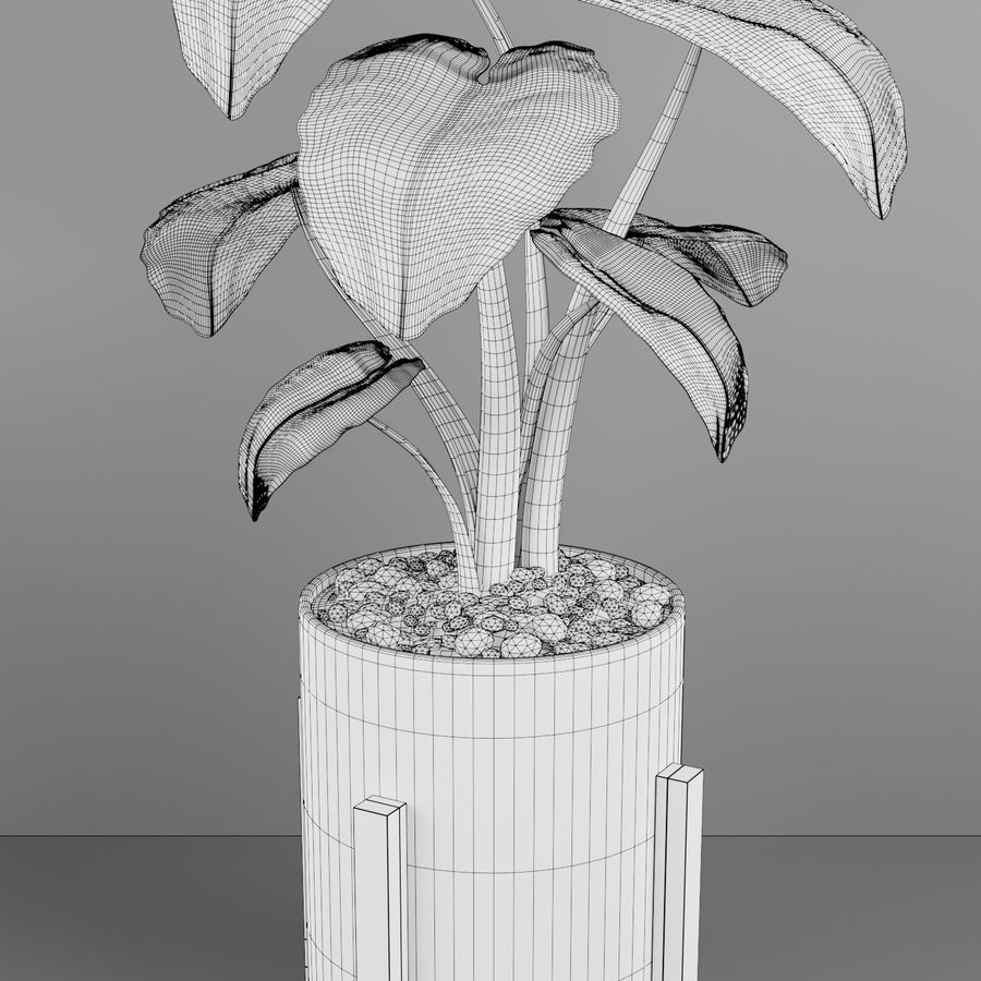 Alocasia home plant royalty-free 3d model - Preview no. 6