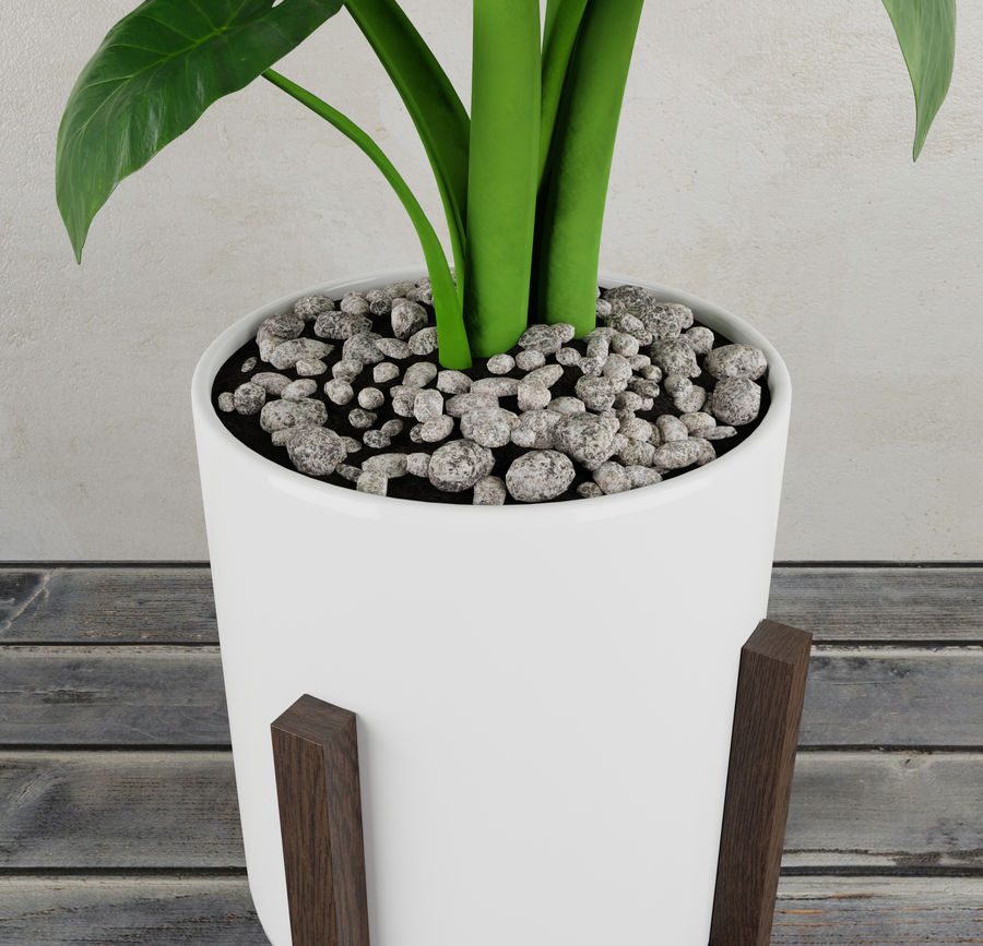 Alocasia home plant royalty-free 3d model - Preview no. 4