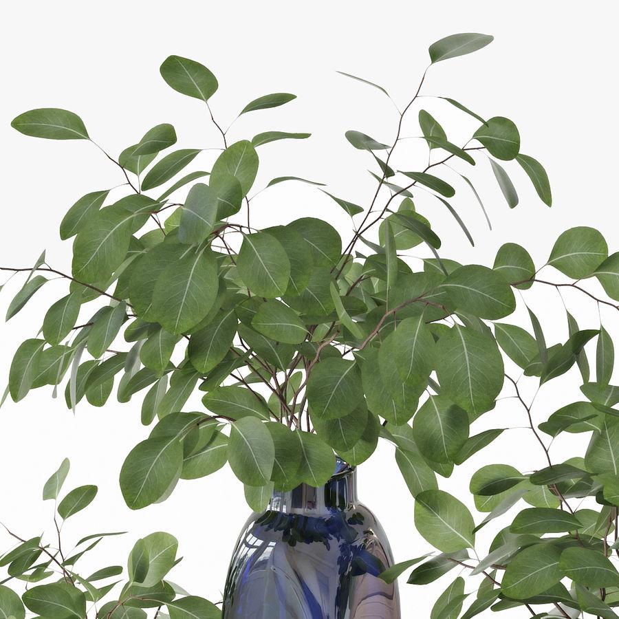 Eucalyptus 05 royalty-free 3d model - Preview no. 14