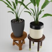 Pot Plant Strelitzia 3d model