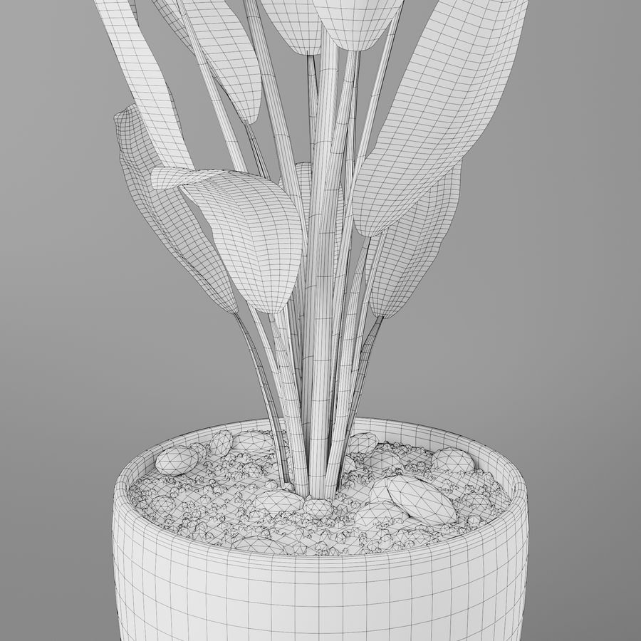 Pot Plant Strelitzia royalty-free 3d model - Preview no. 6