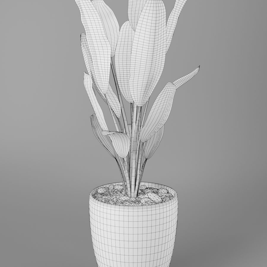 Pot Plant Strelitzia royalty-free 3d model - Preview no. 5