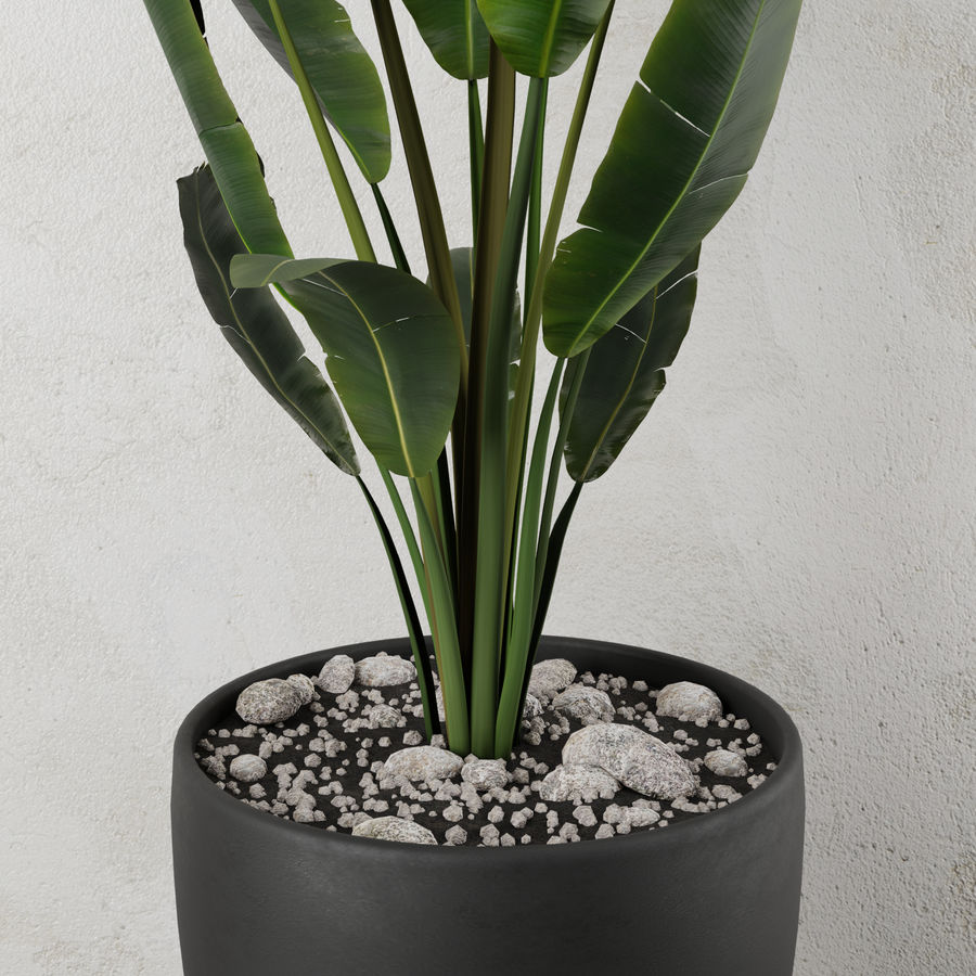 Pot Plant Strelitzia royalty-free 3d model - Preview no. 2