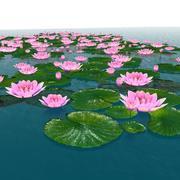 Flor aquática 3d model
