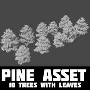 Pine tillgång 3d model