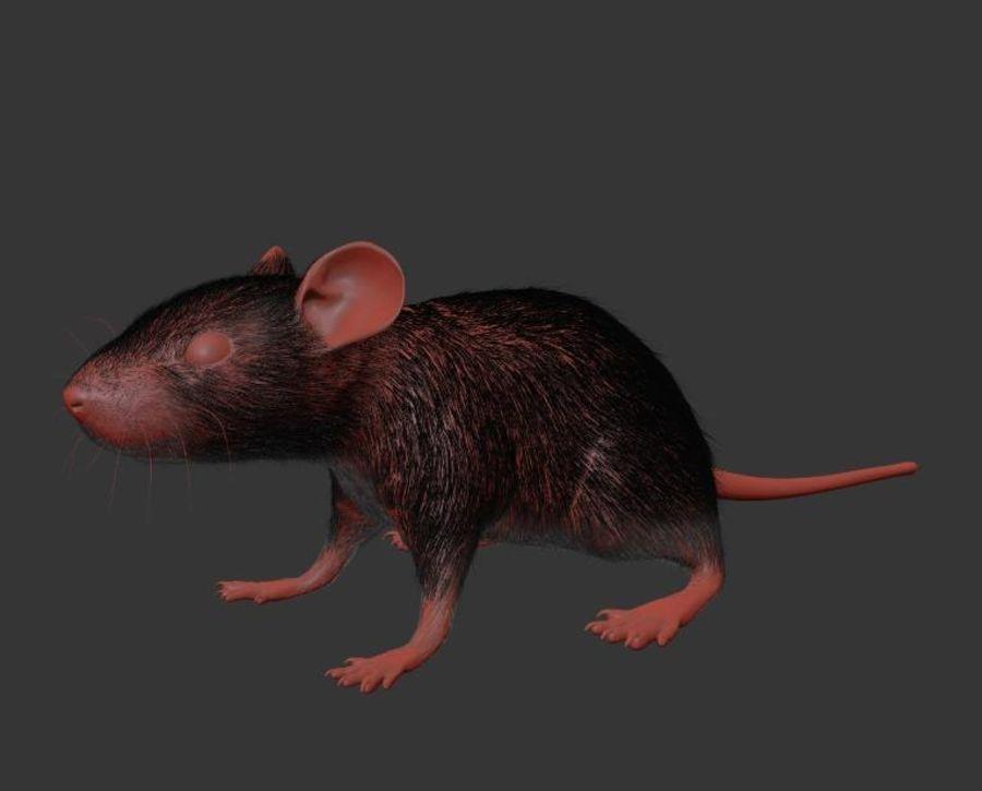 Животная крыса мышь royalty-free 3d model - Preview no. 19