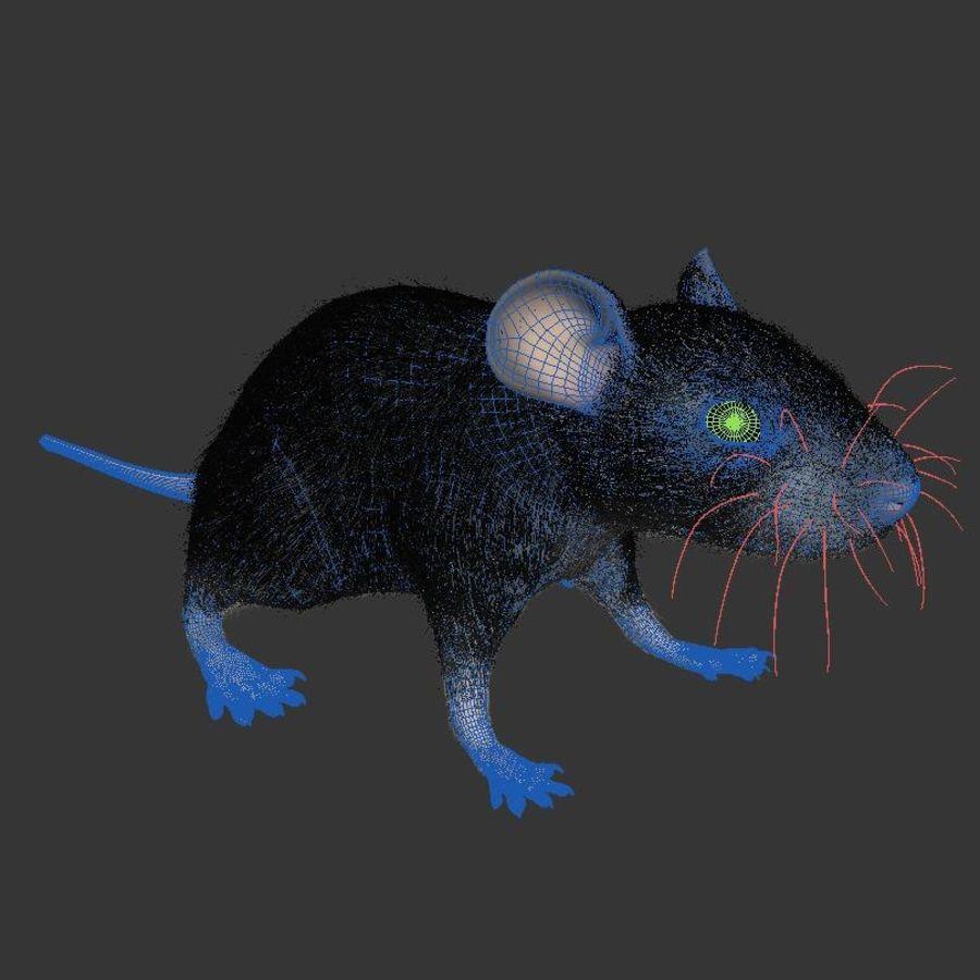 Животная крыса мышь royalty-free 3d model - Preview no. 7