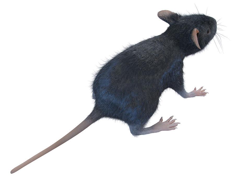 Животная крыса мышь royalty-free 3d model - Preview no. 4