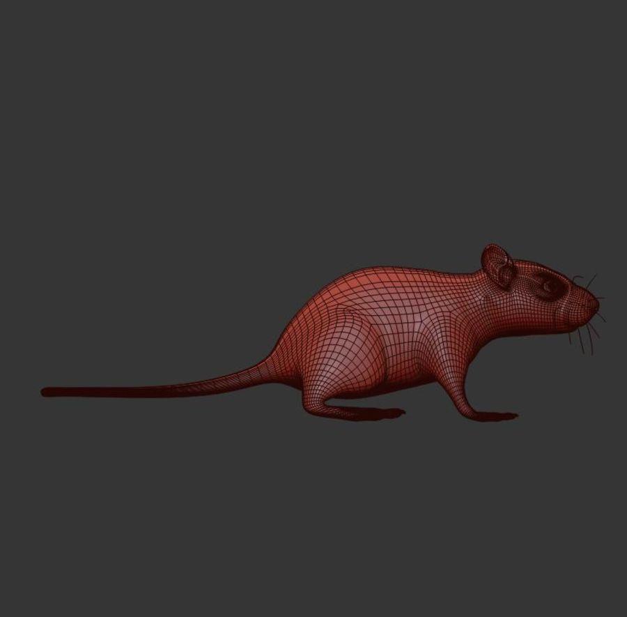 Животная крыса мышь royalty-free 3d model - Preview no. 13
