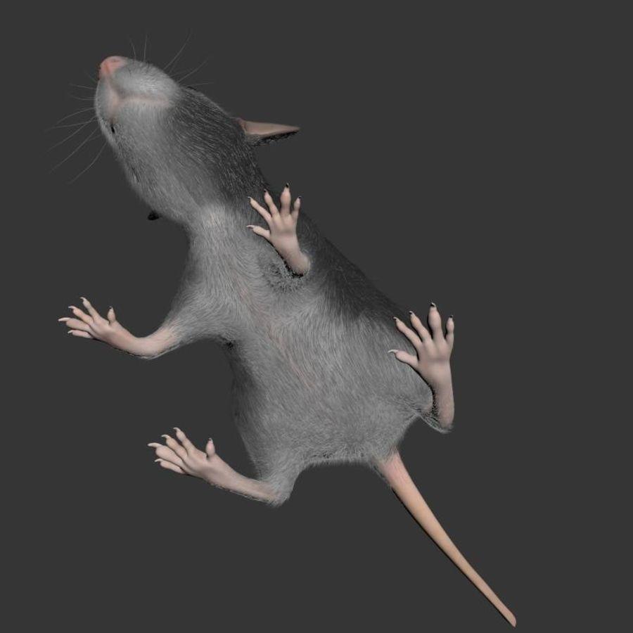 Животная крыса мышь royalty-free 3d model - Preview no. 8