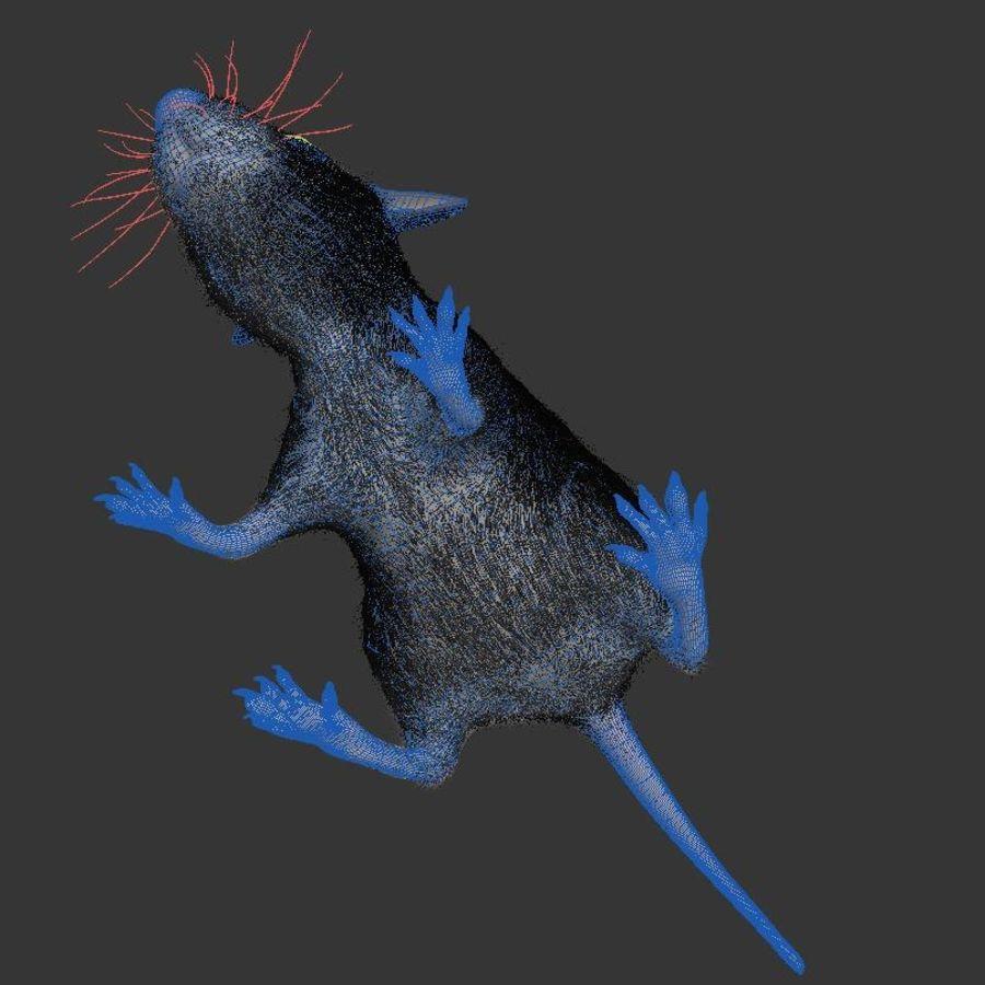 Животная крыса мышь royalty-free 3d model - Preview no. 9