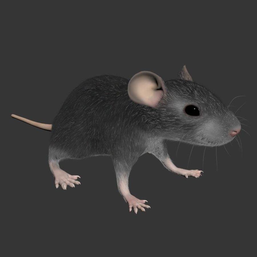 Животная крыса мышь royalty-free 3d model - Preview no. 6
