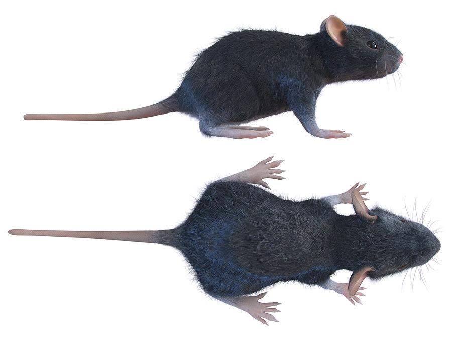 Животная крыса мышь royalty-free 3d model - Preview no. 1