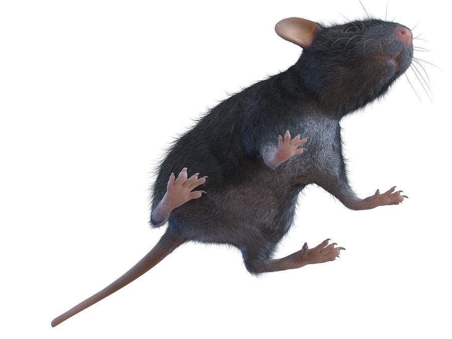 Животная крыса мышь royalty-free 3d model - Preview no. 5