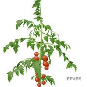Planta de tomate Low Poly 3d model