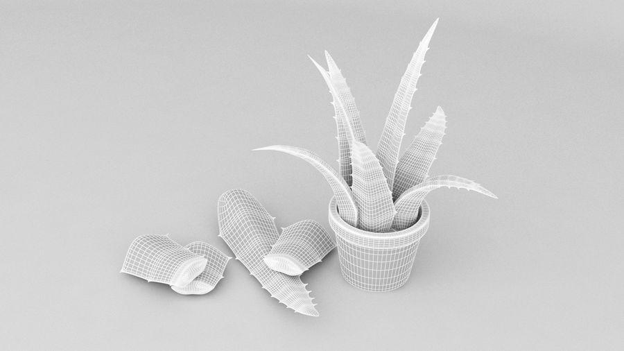 Aloe Vera Pflanze royalty-free 3d model - Preview no. 5