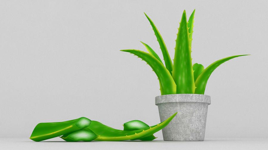 Aloe Vera Pflanze royalty-free 3d model - Preview no. 1