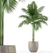 植物采集220 3d model
