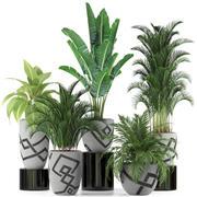 Plants collection 236 3d model