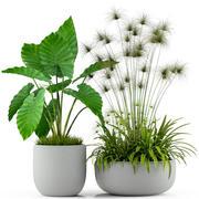 植物采集239 3d model
