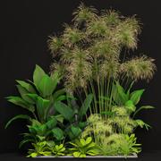 Plants collection 241 3d model