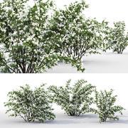 Philadelphus Bouquet Blanc 1 3d model