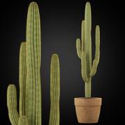 植物采集253 3d model