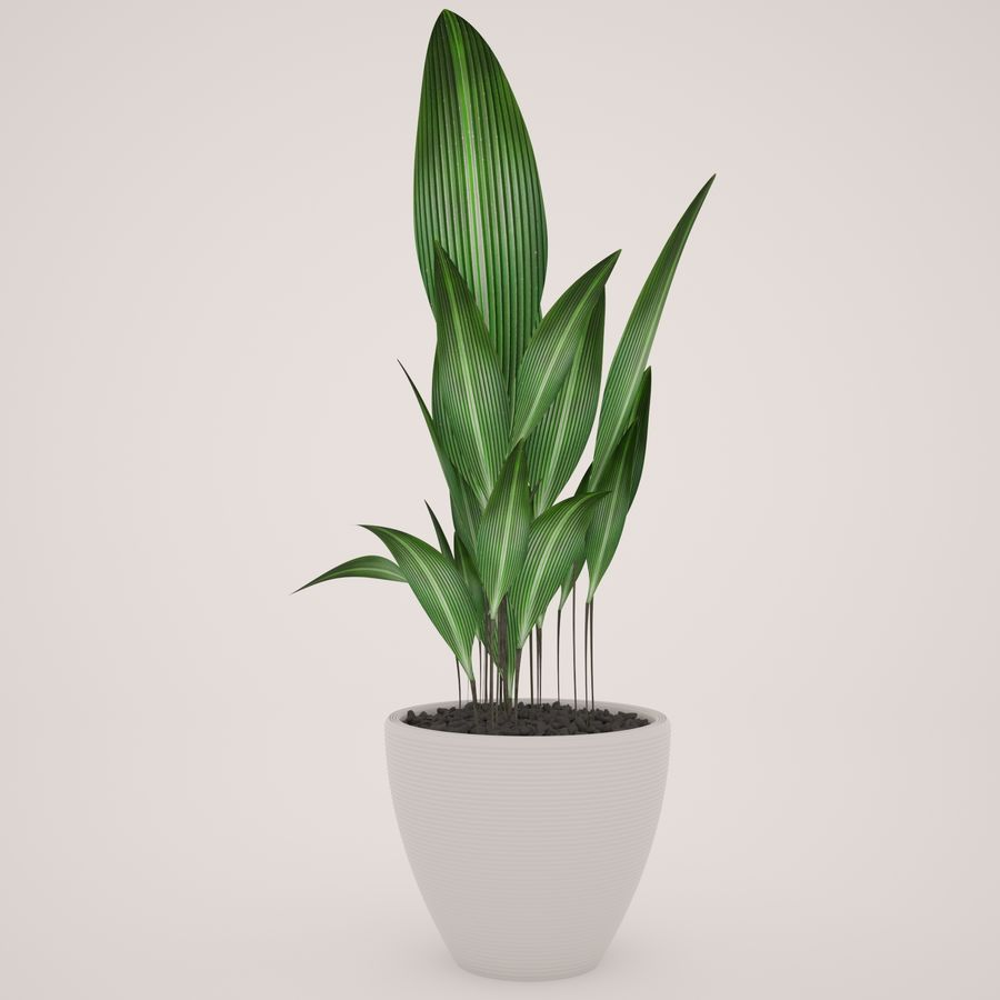 Plant Ficus royalty-free 3d model - Preview no. 5