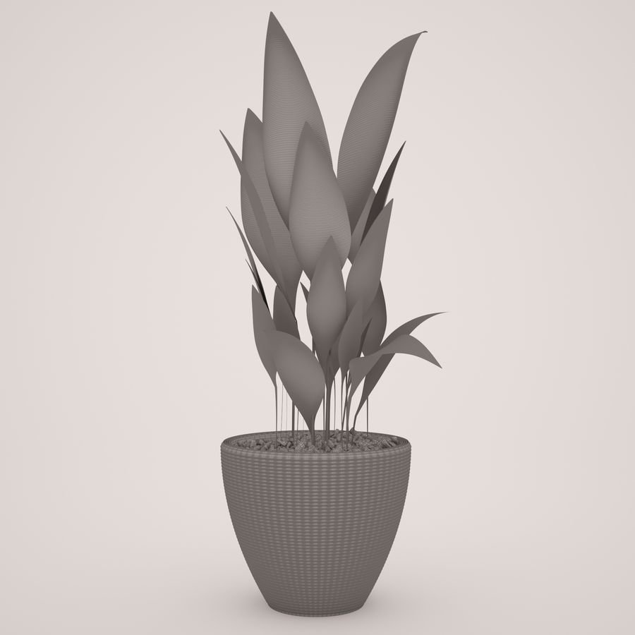 Plant Ficus royalty-free 3d model - Preview no. 7