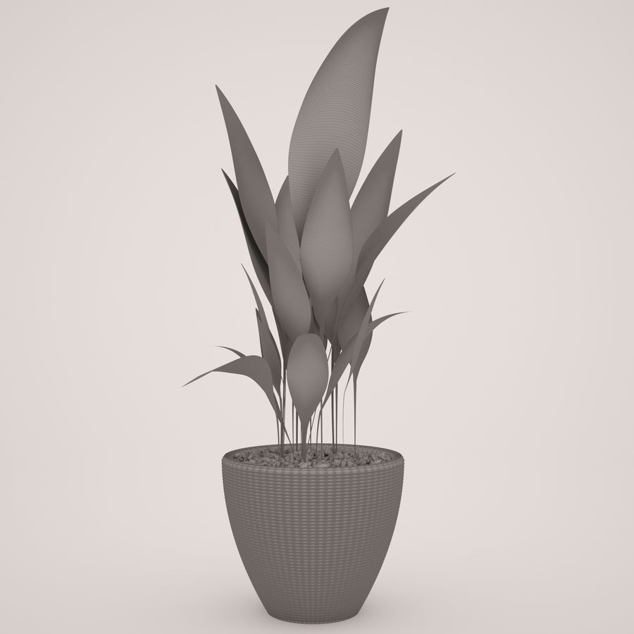 Plant Ficus royalty-free 3d model - Preview no. 6