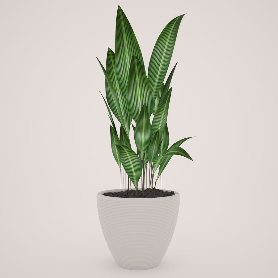 Plant Ficus royalty-free 3d model - Preview no. 2