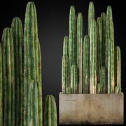 Plants collection 260 3d model