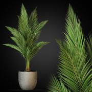 植物采集268 3d model