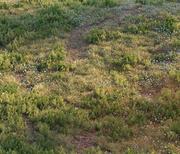 Forest grass 3d model