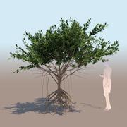 红树林树C根茎mangle 3D模型 3d model