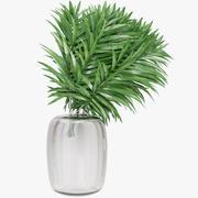 Foglie di palma 3d model