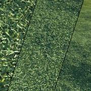 Lawn Grass 3d model