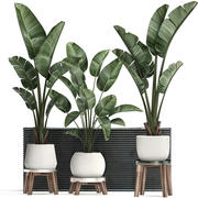 Decorative plants in flower pots for the interior 461 3d model