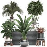室内花盆装饰植物463 3d model