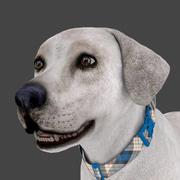 FLAB-001 Animated Dog 3d model