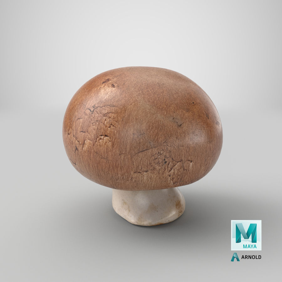 Crimino-Pilz 03 royalty-free 3d model - Preview no. 25