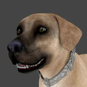 FLAB-020 Animated Dog 3d model